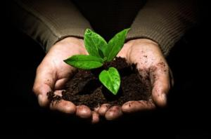 Sowing the seeds for your giving practice!