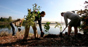Volunteers installing native plants at annual Duwamish Alive event (Photo credit: Paul Joseph Brown)